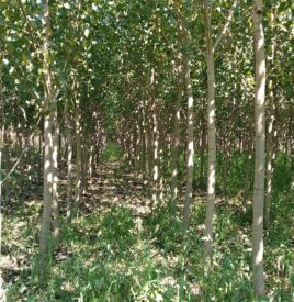 Plantacion me plepa2
