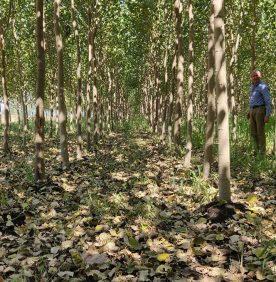 Ardit Group, Kompania Lider ne Ballkan e Çertifikuar dhe Specializuar ne: Prodhim Paleta Druri Normale, Paleta Druri te Trajtuara Termikisht, Redi Pellet